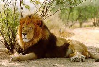 lionsclub.jpg